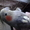 продам попугая  #1187142